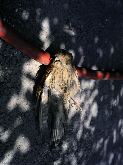 http://experiments.fr/files/gimgs/th-11_julie-hascoet_tenir-rester_10.jpg