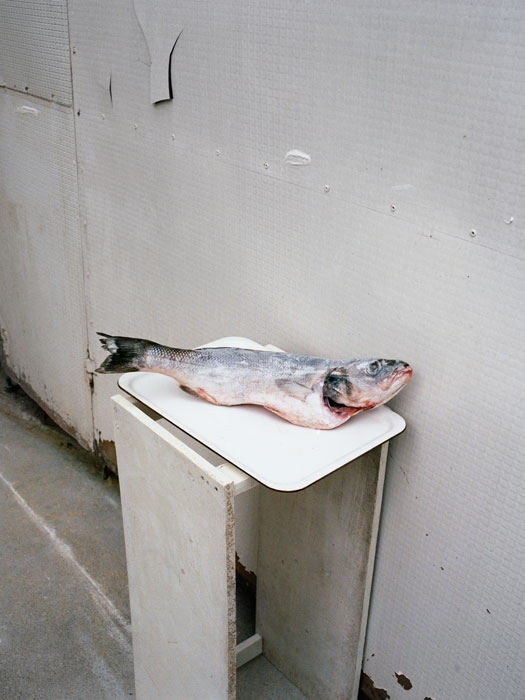 http://experiments.fr/files/gimgs/th-11_julie-hascoet_tenir-rester_06.jpg