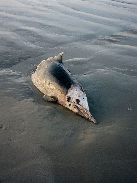 http://experiments.fr/files/gimgs/th-11_julie-hascoet_tenir-rester_12.jpg