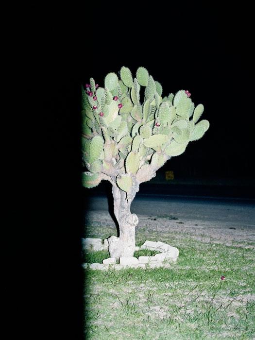 http://experiments.fr/files/gimgs/th-30_julie-hascoet_journal-mexicain_26.jpg